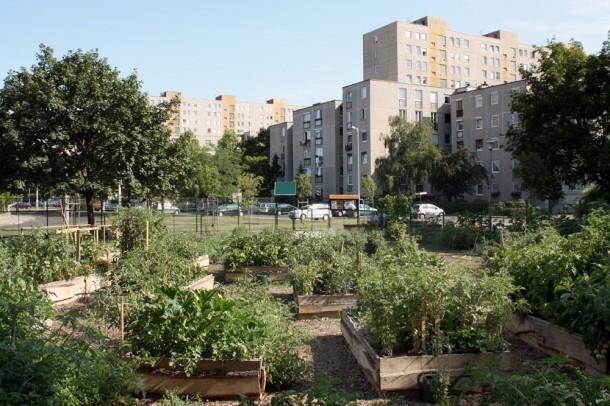A közösségi kertek segítik az egymás mellett él?k megismerését