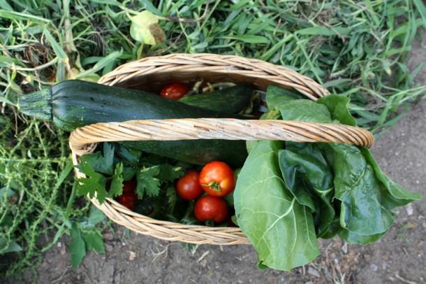 A magad termesztette zöldség mindig finomabb, mint a vásárolt!