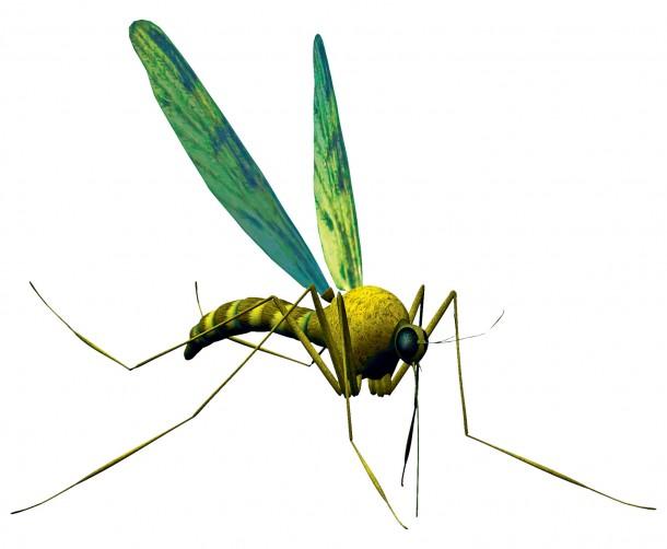 Így védd otthonodat a szúnyogoktól
