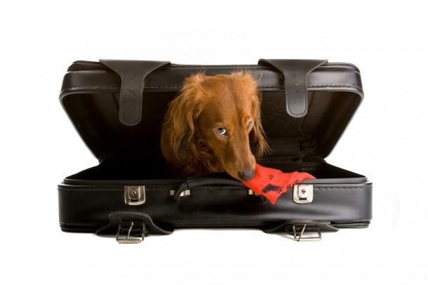 A költözés idejére menekítsd biztos helyre az állatokat!