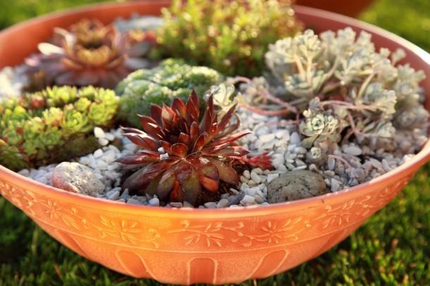 Szárazságtűrő növényeket érdemes választani