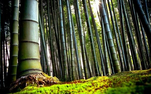 Így varázsold bambusszal egzotikusabbá otthonodat!