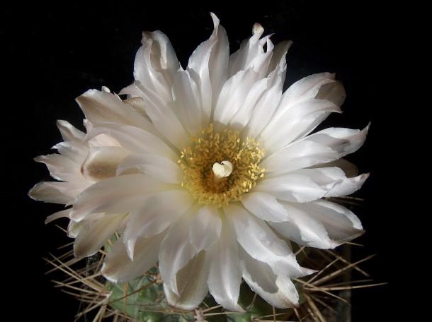 Kaktuszünnep a Füvészkertben