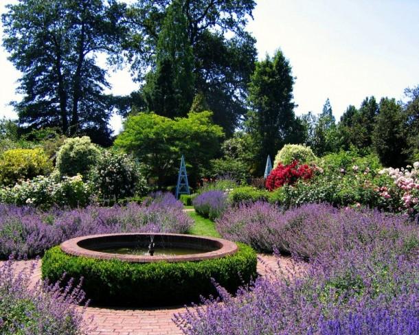 A levendula kerted dísze lehet