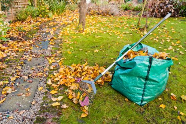 Őszi teendők a kertben
