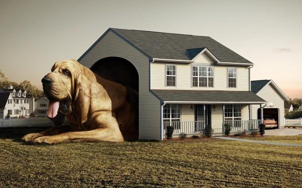 Kedvencek otthona: téliesített kutyaház