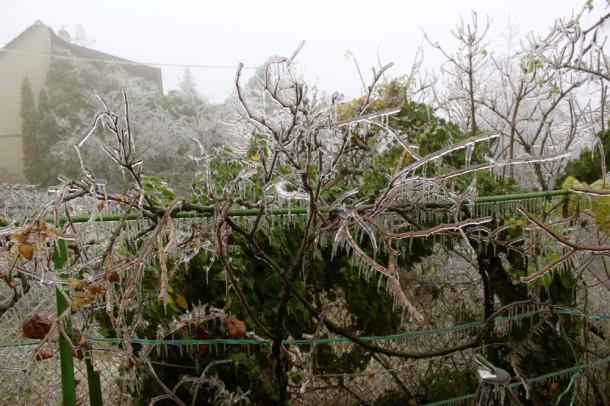 Veled is megtörténhet: jégkár a kertben