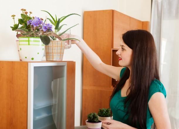 Így bánj a szobanövényeiddel télen