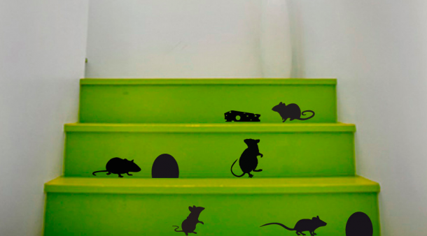 Elment a macska, cincognak az egerek!