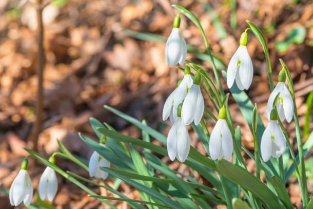 Legyen tavasszal virágos a kerted!