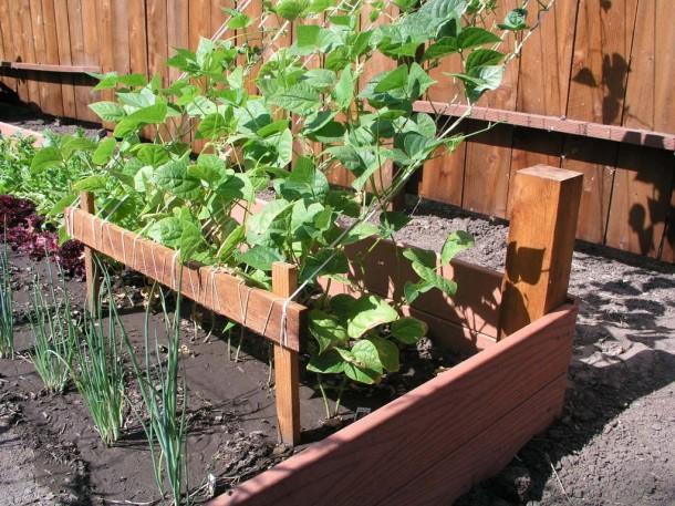 Figyelj a növények elhelyezkedésére!