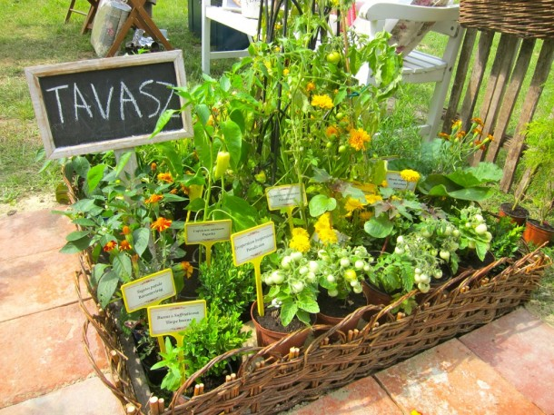 Palántaképző avagy hogyan szerettesd meg a gyermekkel a kertészkedést?