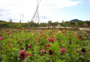 Irány Zánka, a Gyógynövény-völgy!