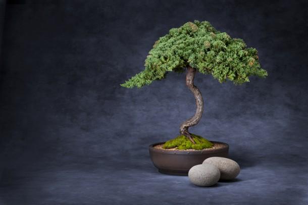 Bonsai fa nevelése – lépésről lépésre, minden hasznos információt megtalálsz!
