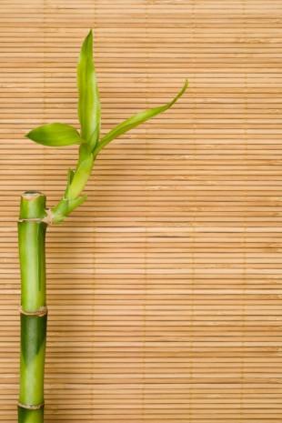 Az elmaradhatatlan bambusz