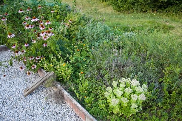 Egészség a kertből: szárított fűszercsodák