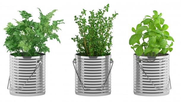 Kert hiányában az ablakban is nevelheted fűszernövényeidet