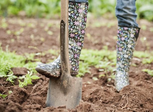 7 nyár végi teendő a kertben, amit nem szabad elmulasztanod!