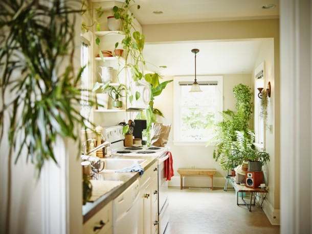 A 6 legjobb otthoni stresszűző és légtisztító növény