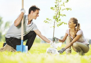 Gyümölcsfaültetési kisokos - 5+1 tipp tavaszi ültetéshez