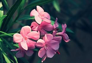 Mérgező növények otthonodban - Gyerekek és állatok számára is veszélyes!