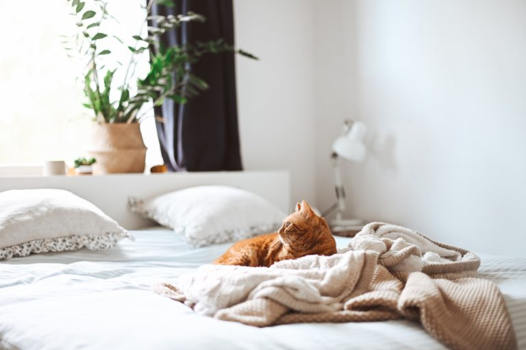 Macskamánia – 28 dolog, ami minden macskás otthonába kell