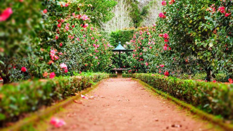 Kertrendezés – Tippek a tökéletes kerthez!