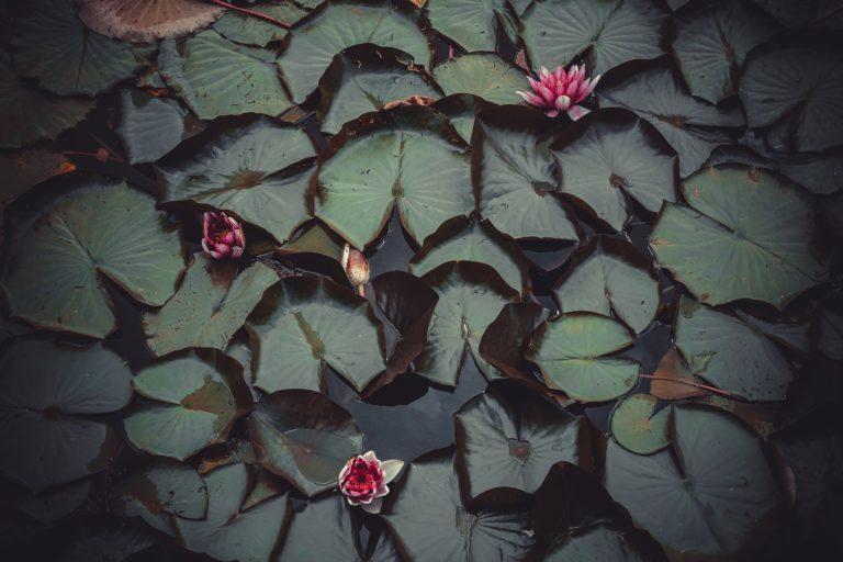 Így készíthető el a környék legirigyeltebb medencés kerti tava – akár nálad is!