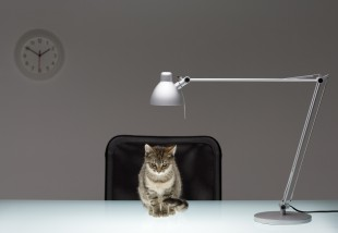 Desk lamp with cat, close-up