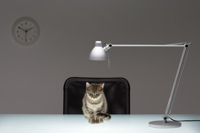 Így készítsd el saját cicás, batman-es vagy felhős lámpádat házilag!