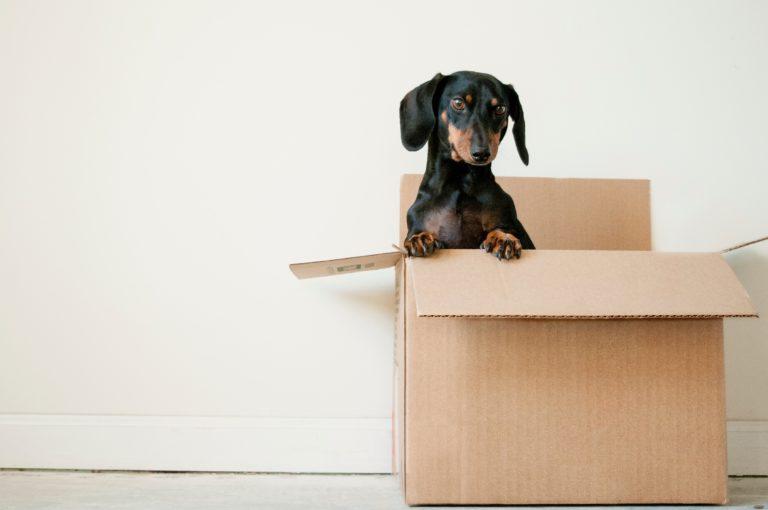 Költözöl és nincsenek dobozaid? 4 tipp, hogy honnan szerezhetsz