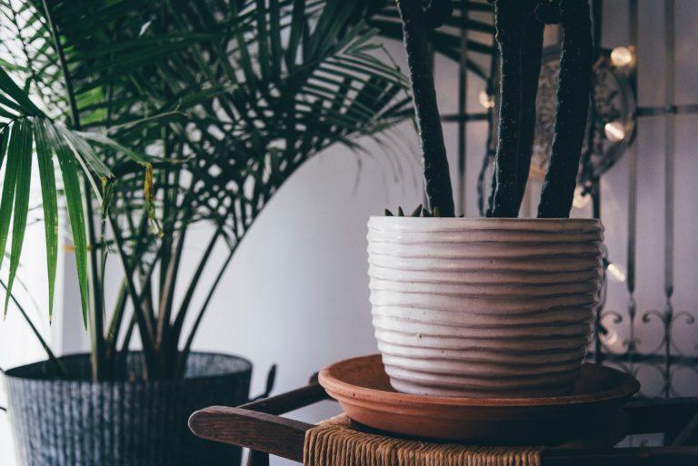 3 szobanövény ami tisztítja a levegőt az otthonodban