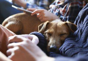 10 dolog az otthonodban, ami beteggé teszi a háziállatodat