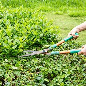 Sövény, az intim kert kulcsa! Hogyan ültessük?