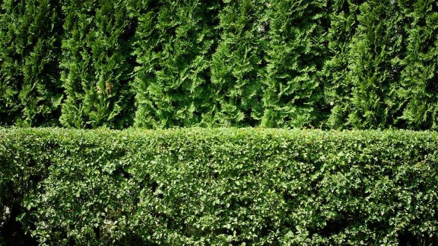 8 szemrevaló növény, ami segít elrejteni otthonod a kíváncsi szemek elől