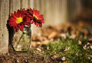 Kiürült a lekváros üveg? Vidd ki a kertbe és készíts belőle dekorációt!