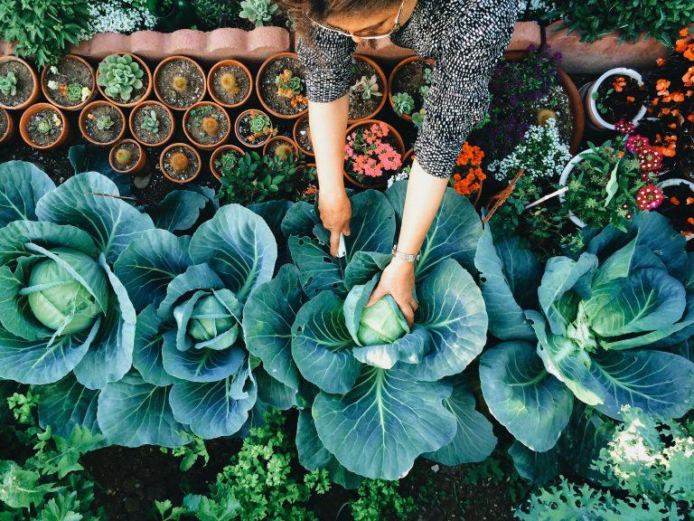 Kertészeti kisokos kezdőknek: a 8 legfontosabb lépés
