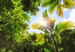 Hogyan változtasd az udvart álmaid trópusi kertjévé?