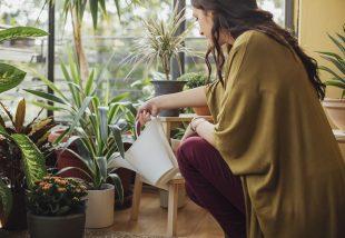 A növényekkel teli lakásból lesz csak igazán otthon?