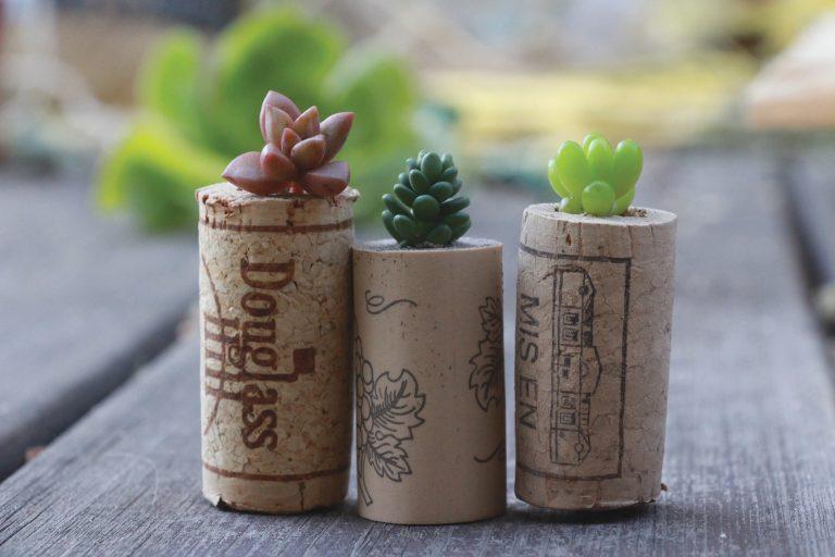 """Újabb zseniális """"csináld magad"""" ötlet: parafadugóból kaktuszkeltető"""