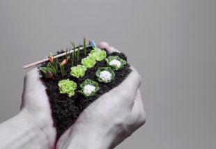 Segítség, kicsi a kertem! Kreatív ötletek kicsi kertekhez