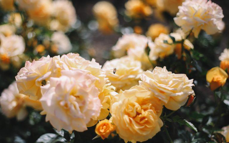 Ágyazz meg a szép házelőnek! Így készíts dekoratív virágágyást az udvarra!