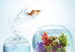 Szokatlan és kreatív akváriumok