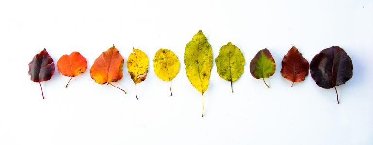 Ezek az idei ősz színei!