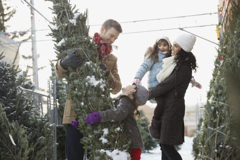 A nagy karácsonyfakalauz! Így válaszd ki idén a tökéletes fenyőt