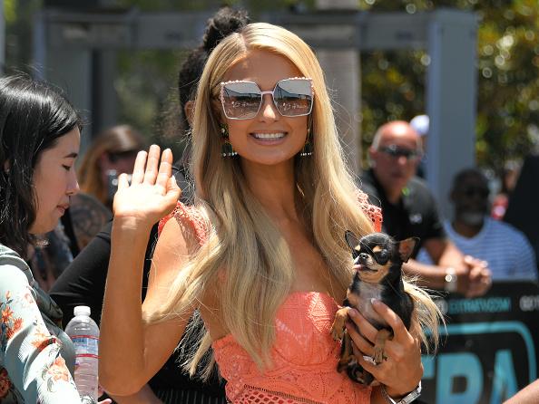 Ilyen nincs, és mégis van! Paris Hilton négylábú kedvencei saját kutyavillában élnek
