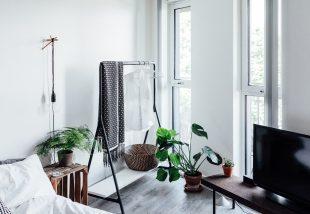 5 tipp, hogy szobanövényeid minél tovább éljenek