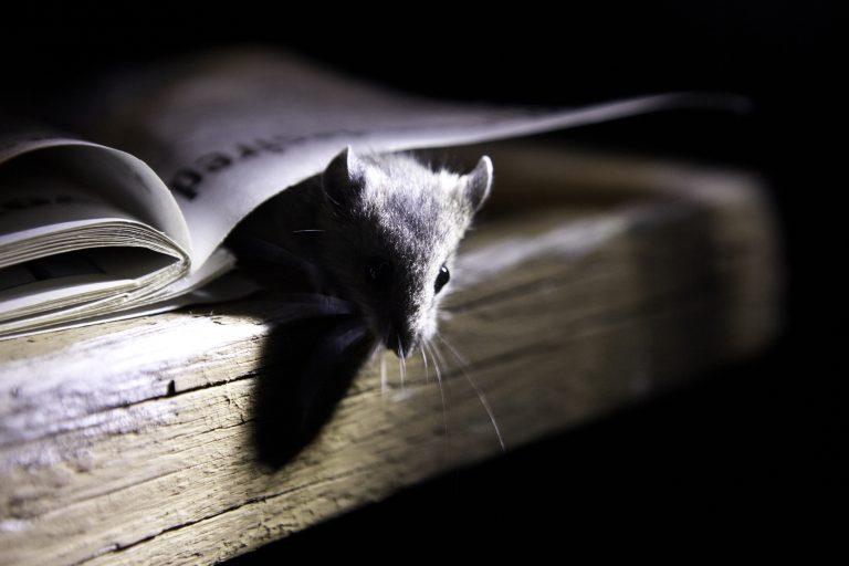 Így űzd ki az egereket a házból