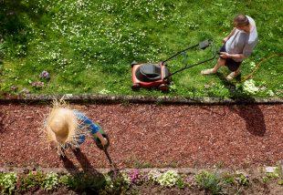 5 tipp a hatékony fűnyíráshoz - Így lehet egészséges gyep a kertedben