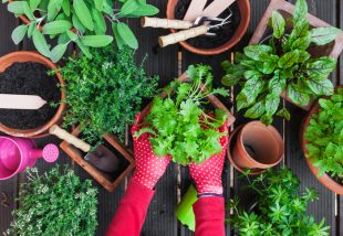A kert, mint terápia - Élvezd ki minden pozitív hatását!